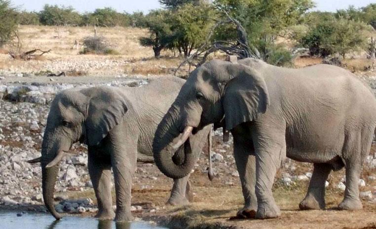 Nachhaltig Reisen mit TUI   Namibia tui hotels sonne safari land und leute namibia expertentipps angesagte reiseziele afrika  TUI berlin Reisebuero Namibia nachhaltig Elefanten