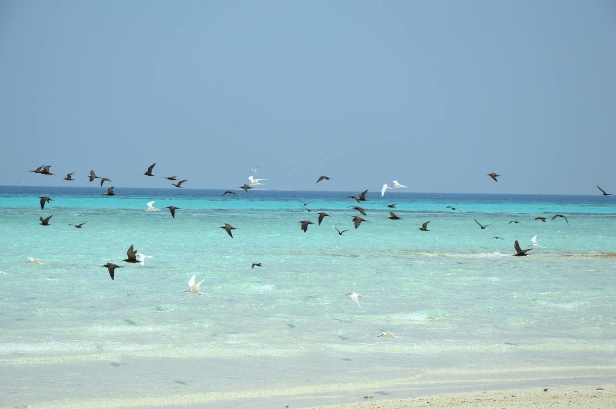 TUI-Berlin-Reisebüro-Malediven-Reisebericht-Expertentipps-World-of-TUI-Beate-Arnold