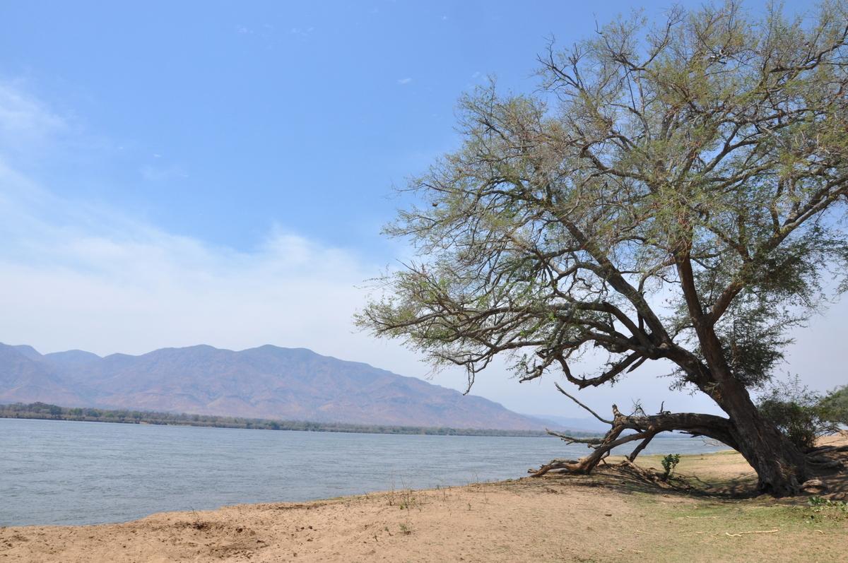 Zwischen Sambia und Simbabwe   mit dem Kanu unterwegs auf dem Sambesi sonne simbabwe safari reisebericht afrika  TUI Berlin Reisebüro Paddeltour Sambesi Am Ufer
