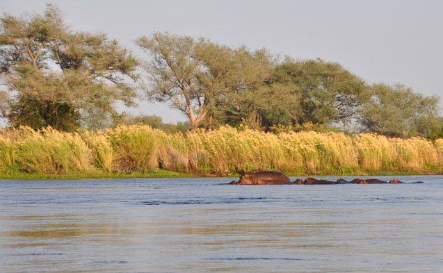 tui-berlin-reisebuero-paddeltour-sambesi-hippos-in-der-abendsonne-teaser