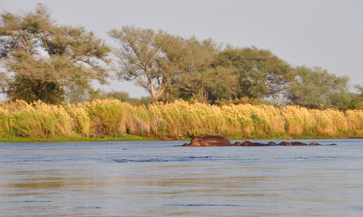 tui-berlin-reisebuero-paddeltour-sambesi-hippos-in-der-abendsonne