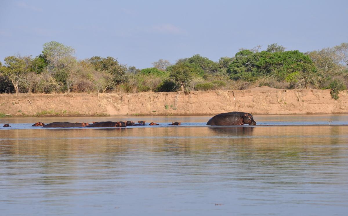 Zwischen Sambia und Simbabwe   mit dem Kanu unterwegs auf dem Sambesi sonne simbabwe safari reisebericht afrika  TUI Berlin Reisebüro Paddeltour Sambesi Hippos