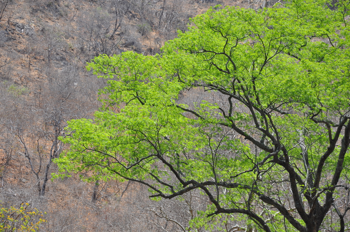 Zwischen Sambia und Simbabwe   mit dem Kanu unterwegs auf dem Sambesi sonne simbabwe safari reisebericht afrika  tui berlin reisebuero Paddeltour Sambesi Jörg