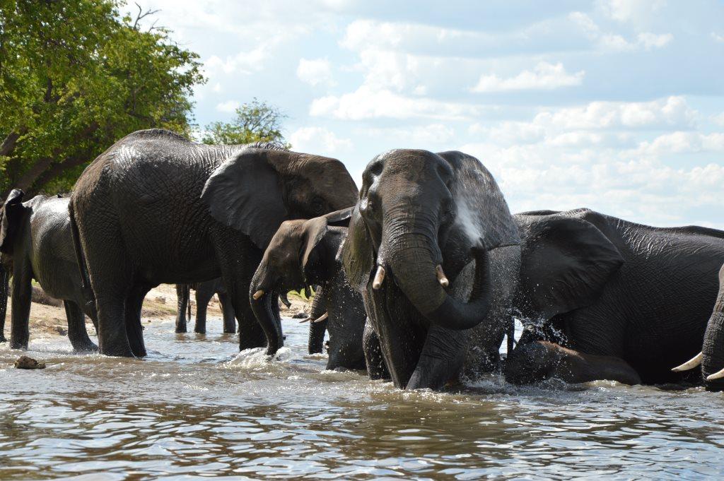Auf dem Zambezi zwischen Namibia und Botswana reisebericht new namibia botswana afrika  tui berlin chobe princess sambesi queen elefant frontal