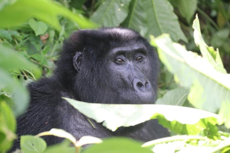Once in a Lifetime   Einmalige Erlebnisreisen uganda news tui hotels thailand strand sonne seychellen oman angesagte reiseziele angebote und specials angebot afrika  tui berlin Heidler gorilla uganda