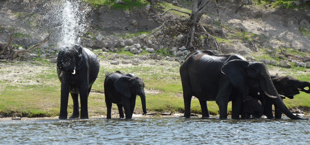 Auf dem Zambezi zwischen Namibia und Botswana reisebericht new namibia botswana afrika  tui berlin chobe princess sambesi queen header 1