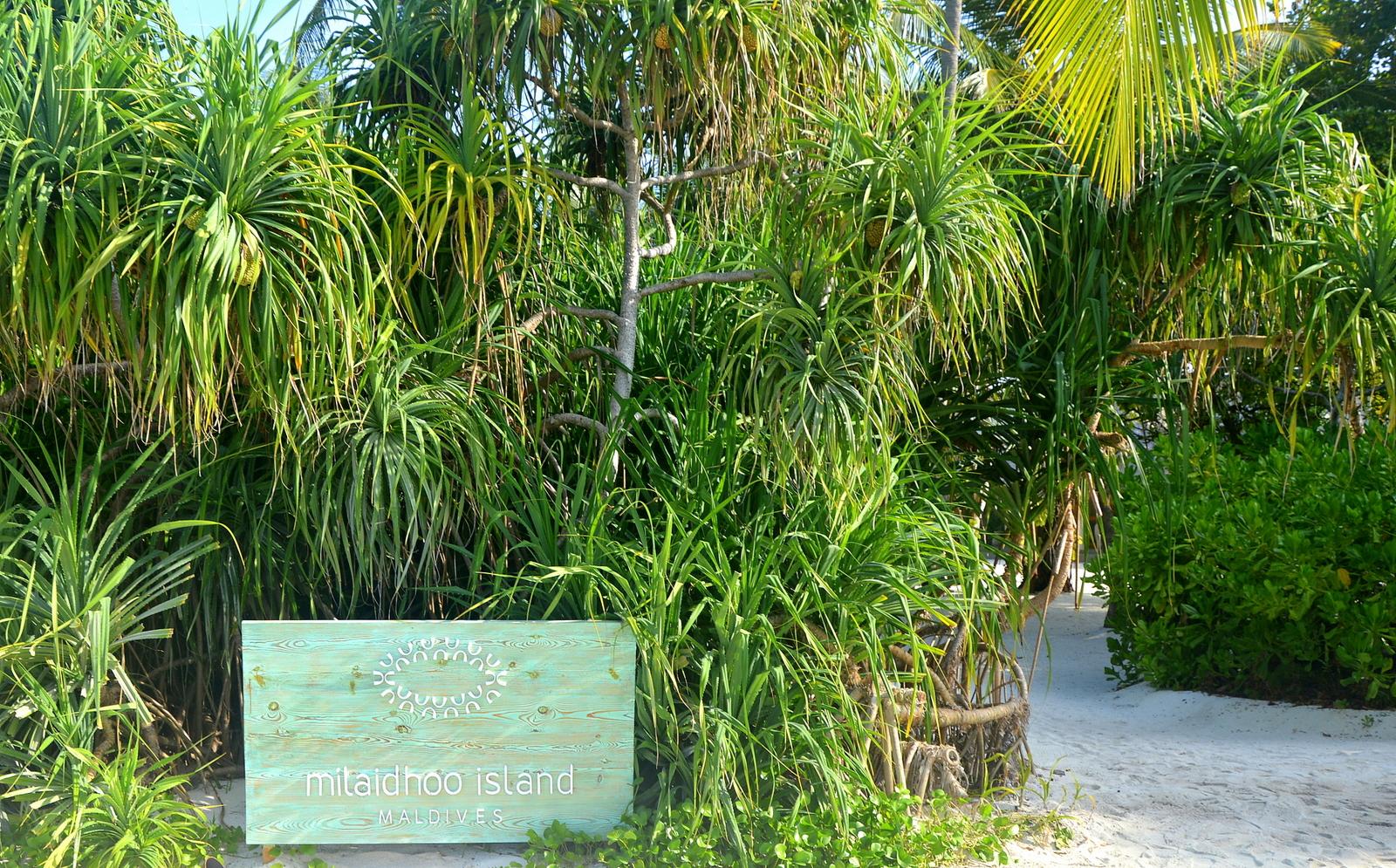 Malediven    die neue Trauminsel Milaidhoo im Baa Atoll strand sonne reisebericht malediven honeymoon 2  TUI Berlin Reisebüro Milaidhoo Island
