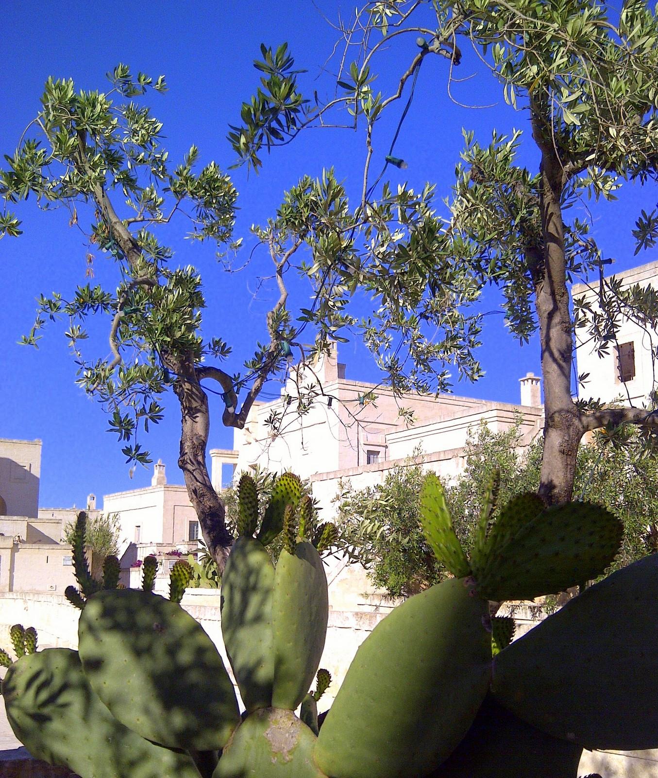 Neapel und Apulien   eine lohnenswerte Kombination staedtereisen sonne reisebericht new italien  tui berlin reisebüro italien Garten Borgo Egnazia Resort
