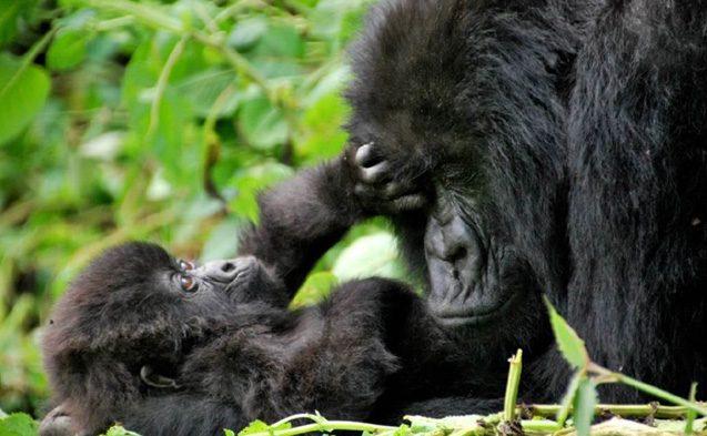 TUI, Reisebüro, Berlin, Sonderreise, Jörg Kästner, Uganda, Berggorillas, Schimpansen, Trekking, Afrika, Lodge, Safari, exklusiv, Bwindi, Kyambura Gorge Lodge