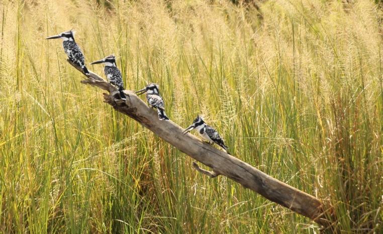 Uganda – auf den Spuren der Schimpansen und Berggorillas uganda sonne safari reisebericht new afrika  Murchison Falls 5