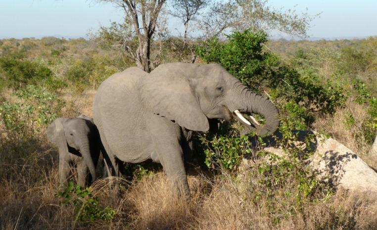 World of TUI   Südafrika à la carte tui hotels suedafrika strand sonne angebote und specials angebot  tui berlin afrika overland kruger national park elefanten