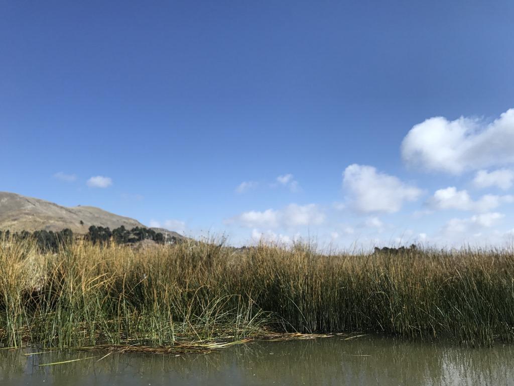 Höhepunkte Peru   eine perfekte Anden Rundreise uncategorized sonne land und leute reisebericht new karibik mittelamerika  tui berlin peru titicacasee schilf