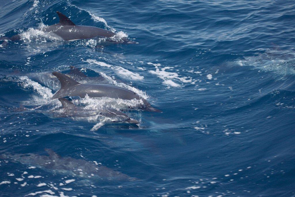 Karneval auf den Kanaren tui hotels strand sonne kanaren angebote und specials angebot  tui berlin teneriffa dolphins