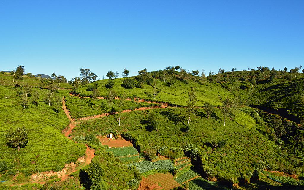 Unterwegs durch Sri Lanka   Luxuriös mit airtours strand sri lanka asien sri lanka sonne land und leute reisebericht new  TUI Reisebuero Berlin Sri Lanka Tea Factory Teeplantage