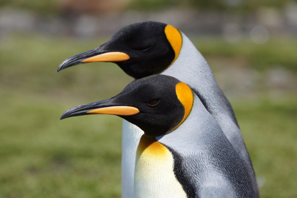 Mit der Hanseatic auf Expeditionskreuzfahrt durch die Antarktis reisebericht new kreuzfahrt  Antarktis1 1
