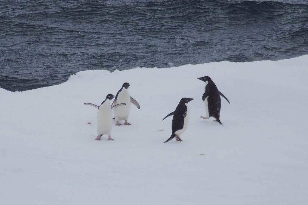 Pinguine in der Antarktis - World of TUI Berlin Reisebericht