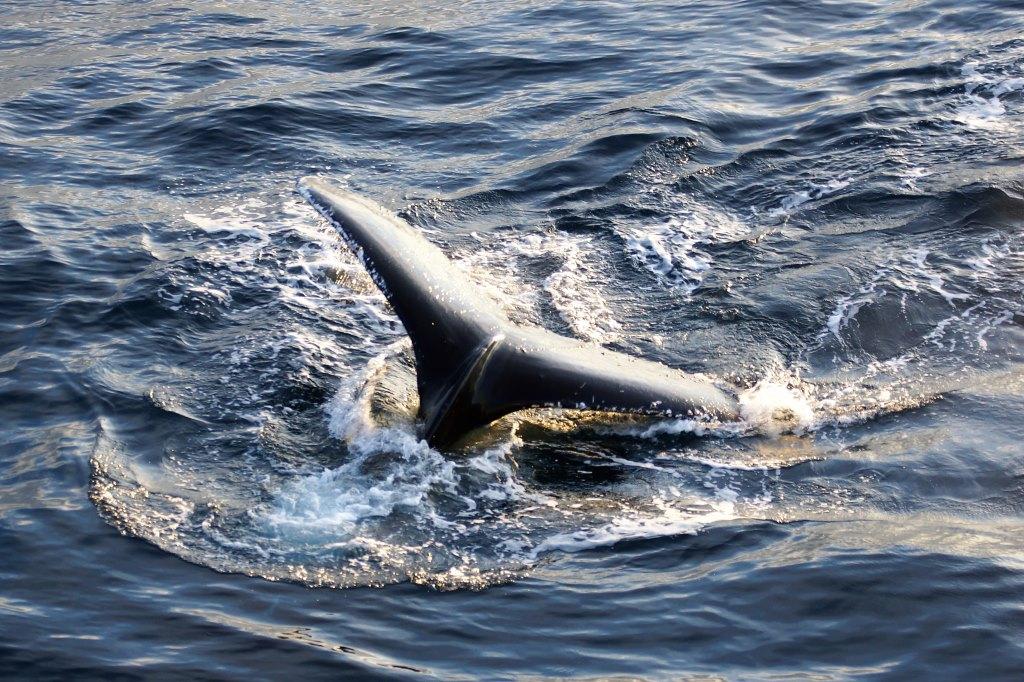 Wale in der Antarktis - World of TUI Berlin Reisebericht