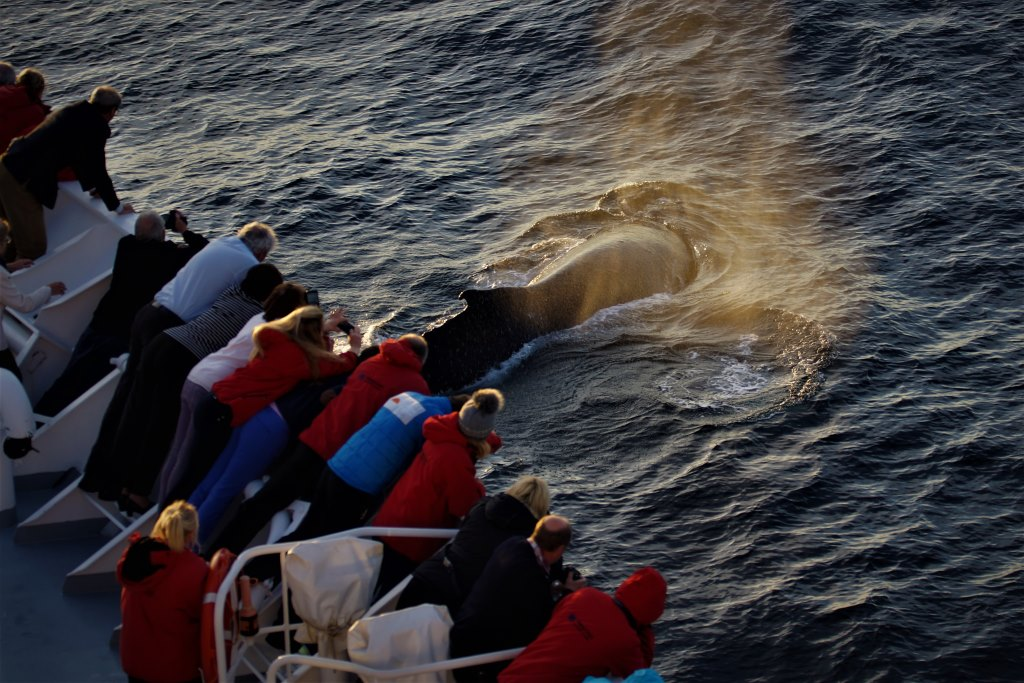 Walbeobachtung in der Antarktis - World of TUI Berlin Reisebericht