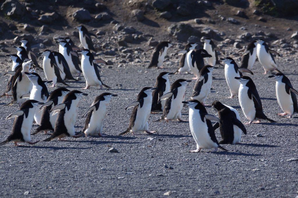 Pinguinkolonie - World of TUI Berlin Reisebericht