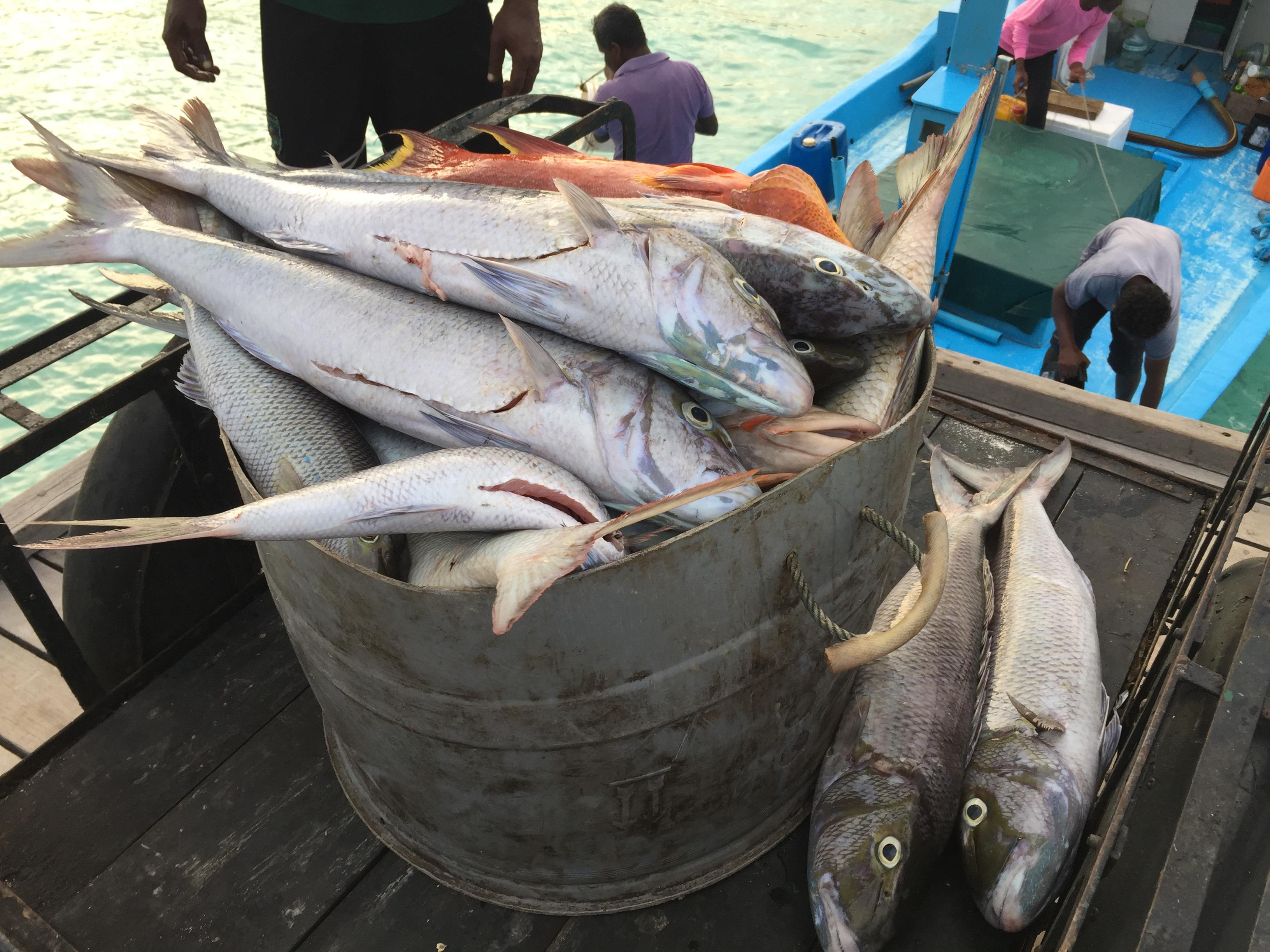 TUI-Berlin-Reisebüro-Malediven-frischer-Fisch