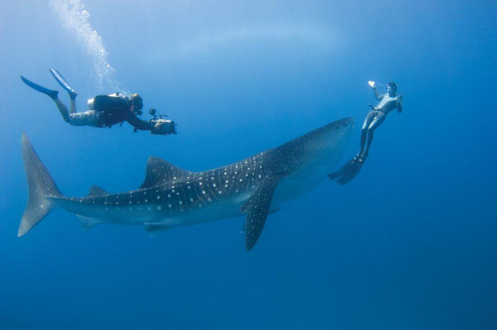 TUI Berlin, Deals der Woche, airtours, Luxushotels, Blue Waters Antigua, Daios Cove Luxury Resort, Four Seasons Maldives at Landaa Giraavaru, Angebote