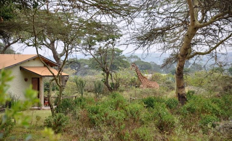 Safari am Fuße des Kilimanjaro tansania sonne safari land und leute angebot  tui berlin tansania hatari lodge giraffe