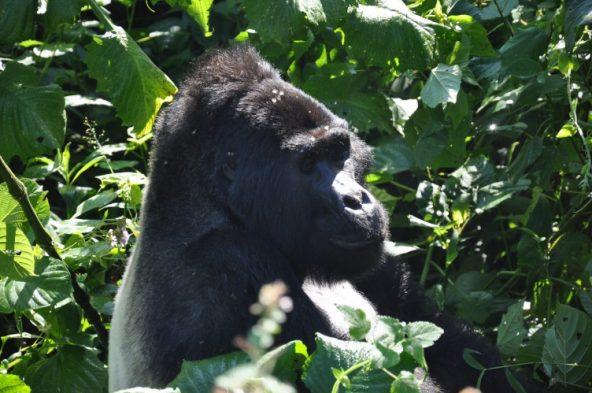 tui-berlin-uganda-gorilla-trekking-header