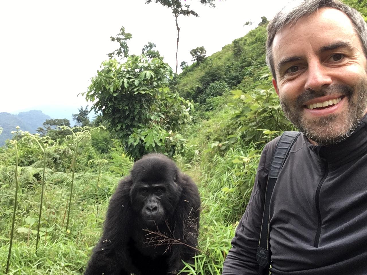 Gorilla Trekking in Uganda   unser Besuch bei den sanften Riesen uganda sonne safari reisebericht new afrika  tui berlin uganda selfie mit gorilla