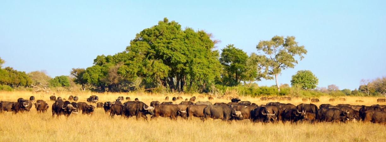 TUI Berlin, Afrika, Rundreisen, Zeltsafari, Botswana, Okavango, Minibus, Zugreise, Shongololo Express, Kenia, Simbabwe, Namibia, Chobe Water Villas,