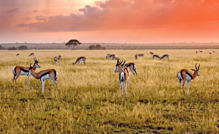 Afrika   Einfach mal anders tui hotels strand sonne simbabwe namibia kenia botswana angebote und specials angebot  tui berlin afrika flugsafari fly over botswana copyright
