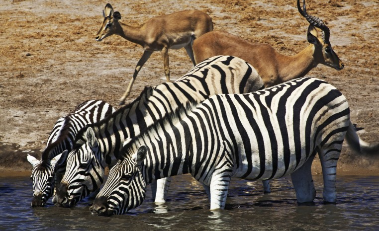 Afrika   Einfach mal anders tui hotels strand sonne simbabwe namibia kenia botswana angebote und specials angebot  tui berlin afrika rundreise best of namibia etosha nationalpark