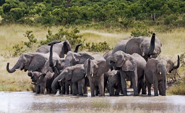 Afrika   Einfach mal anders tui hotels strand sonne simbabwe namibia kenia botswana angebote und specials angebot  tui berlin shongololo express elefenatenherde hwange nationalpark