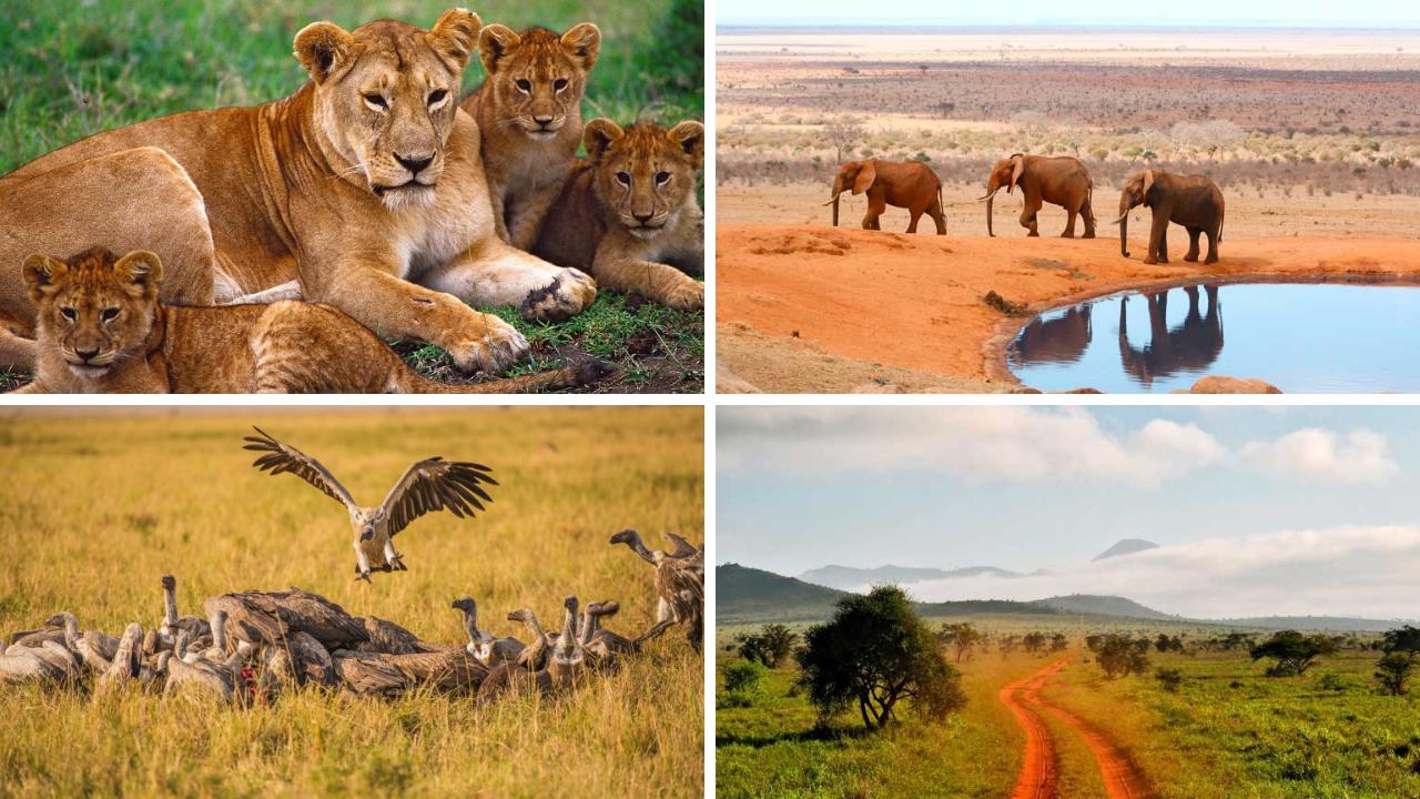Afrika   Einfach mal anders tui hotels strand sonne simbabwe namibia kenia angebote und specials botswana angebot  tui berlin afrika rundreise gruene huegel afrikas kenia canva