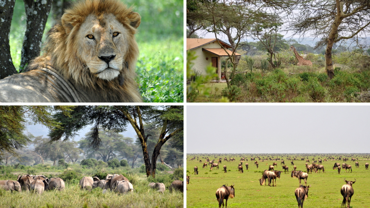 Safari am Fuße des Kilimanjaro tansania sonne safari land und leute angebot  tui berlin afrika safari kilimanjaro canva