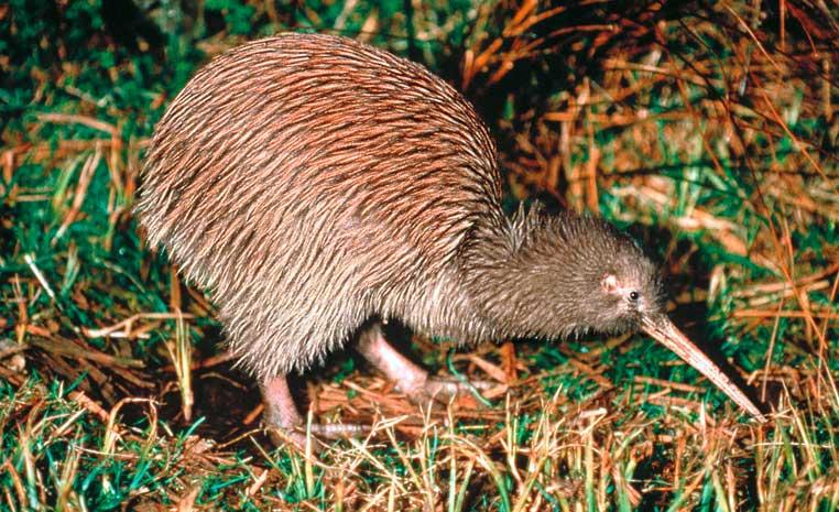 Erlebnisse in Ozeanien suedsee land und leute neuseeland expertentipps angebote und specials australien suedpazifik australien  tui berlin neuseeland kiwi