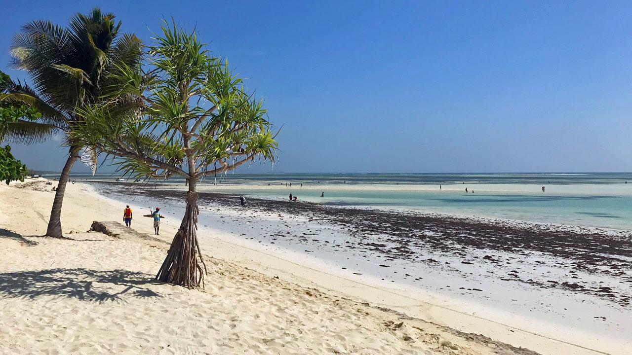 Der Geschmack von Sansibar tansania strand sonne reisebericht new honeymoon 2  tui berlin strand kiwenga