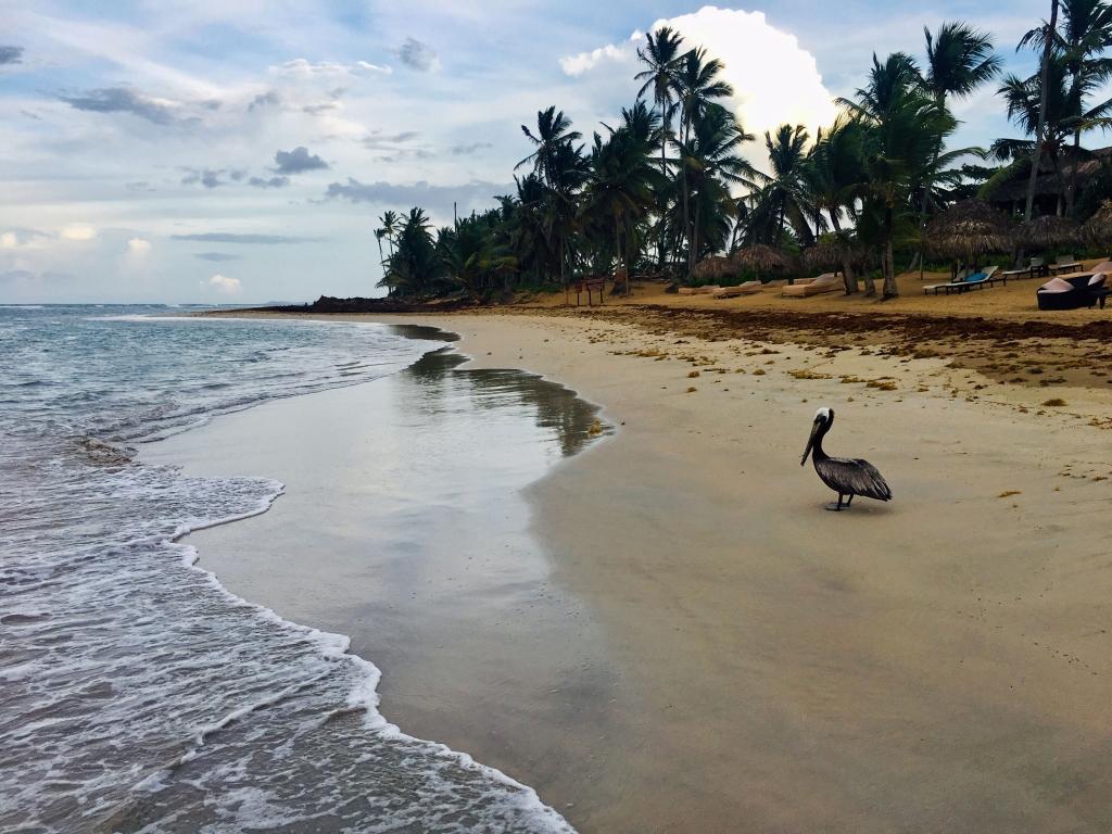 Strand im Zoetry Agua Punta Cana, Dominikanische Republik - World of TUI Berlin Reisebericht