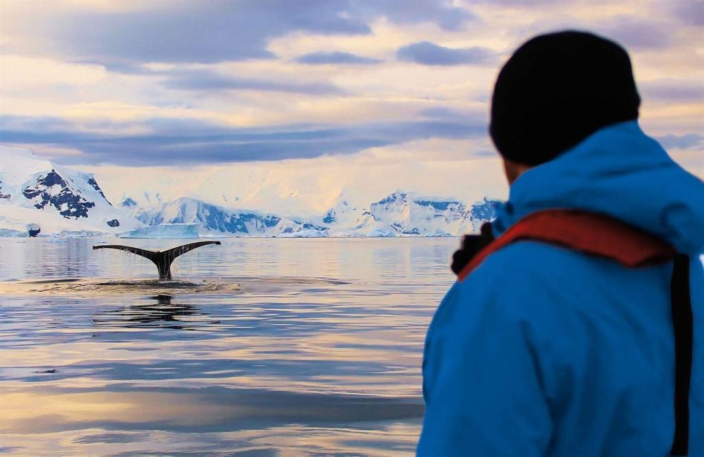 Hanseatic nature WalbeobachtungAntarktis Hapag Lloyd Cruises