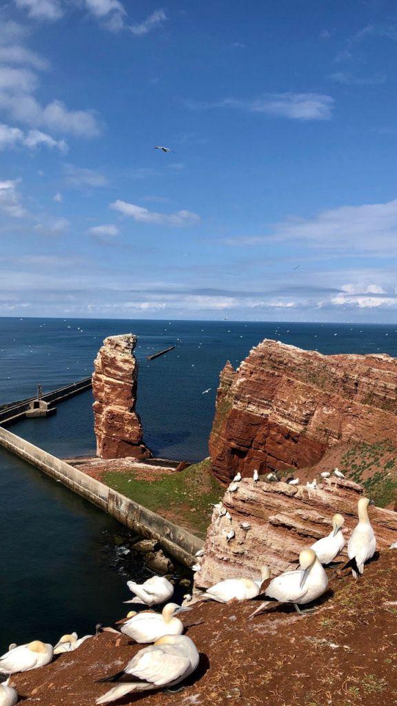 Klippe mit Möwen auf Helgoland