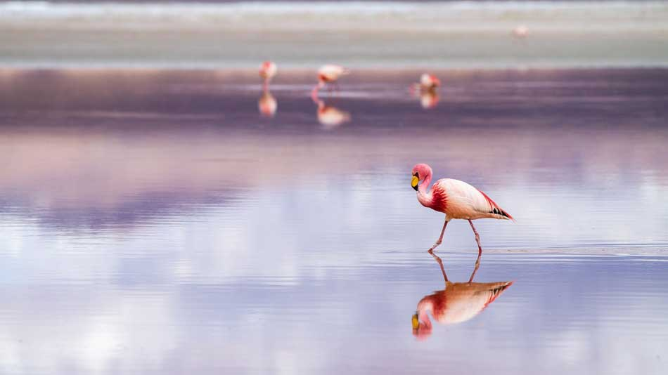 Rosa Flamingo im Donana Nationalpark, Spanien
