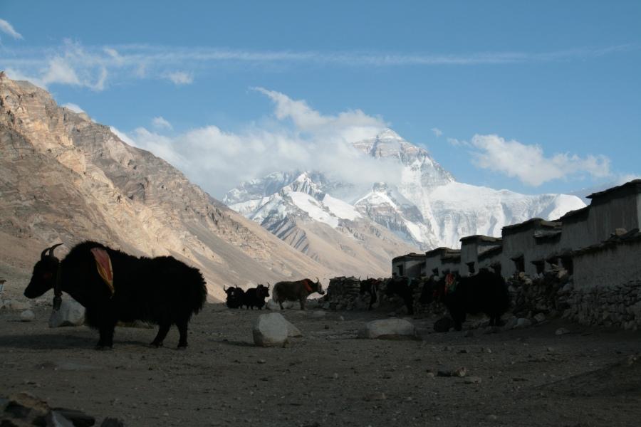 Tibet Adventure mit goxplore. Eine hochzeitliche Abenteuerreise quer durch China und Zentralasien honeymoon 2 asien  Blog IMG 6098