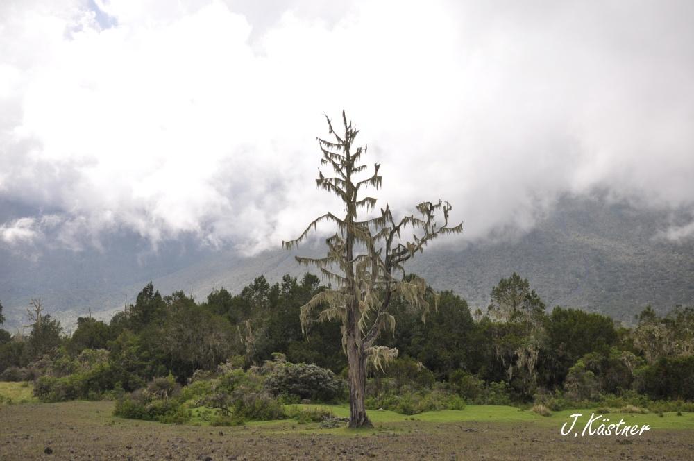 World of TUI persönlich. Tansania erleben! tansania sonne safari afrika  DSC 81911