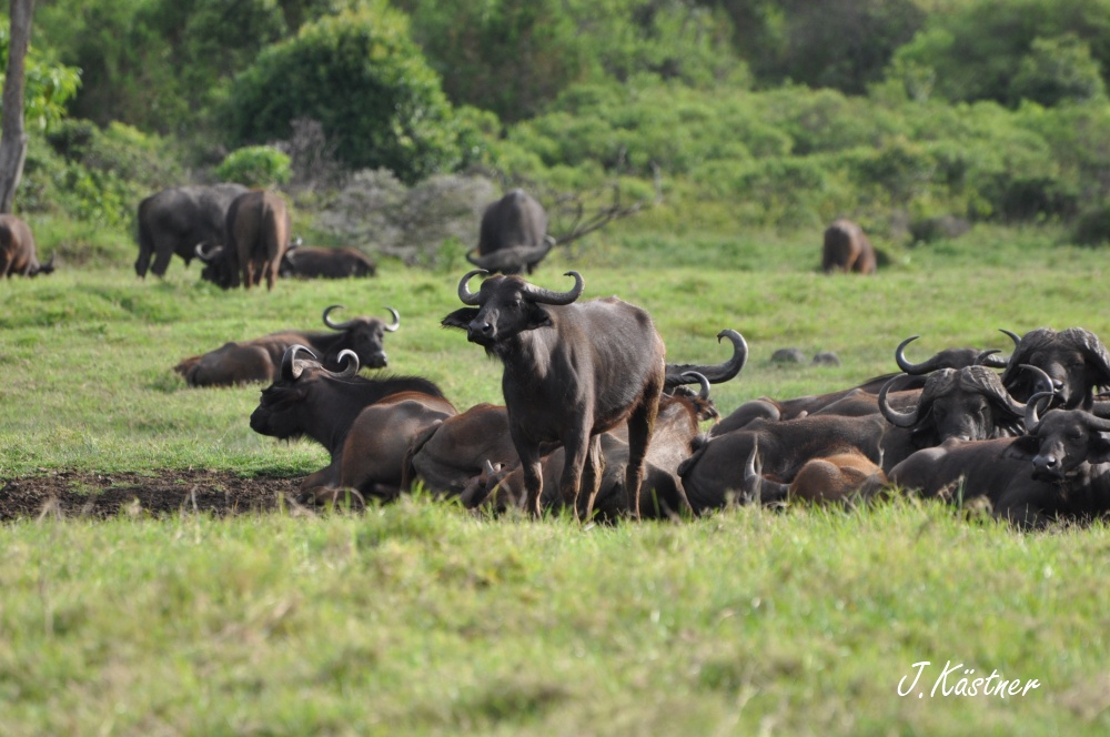 World of TUI persönlich. Tansania erleben! tansania sonne safari afrika  DSC 8216