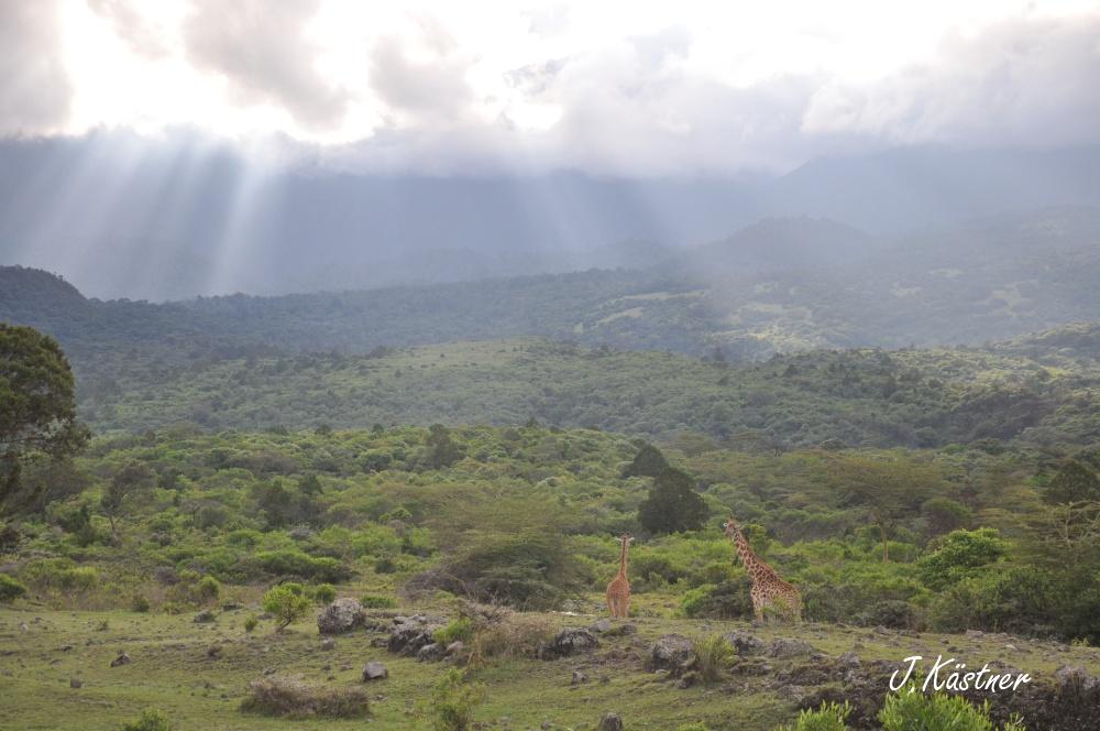 World of TUI persönlich. Tansania erleben! tansania sonne safari afrika  DSC 8234