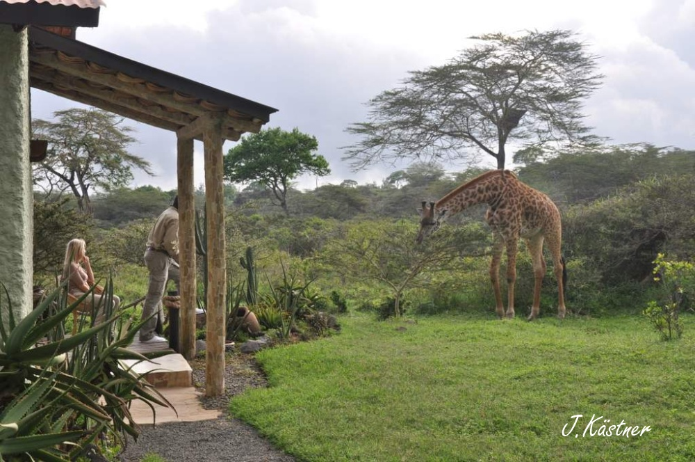 World of TUI persönlich. Tansania erleben! tansania sonne safari afrika  DSC 8275