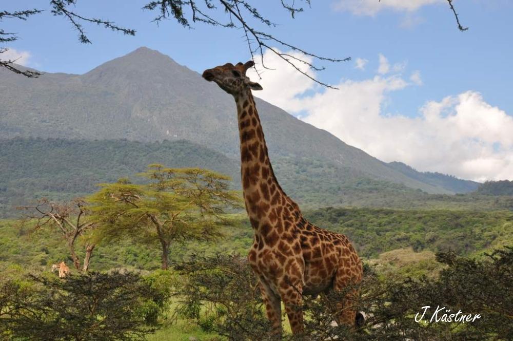 World of TUI persönlich. Tansania erleben! tansania sonne safari afrika  DSC 82981