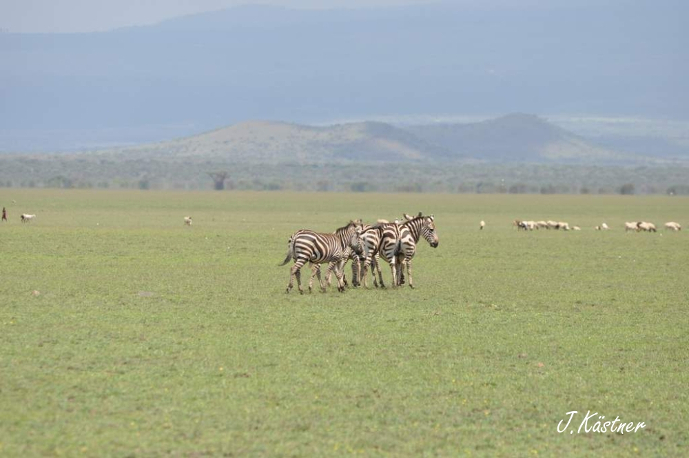 World of TUI persönlich. Tansania erleben! tansania sonne safari afrika  DSC 83421