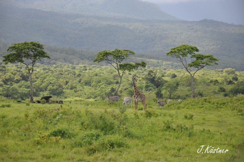 World of TUI persönlich. Tansania erleben! tansania sonne safari afrika  DSC 8943