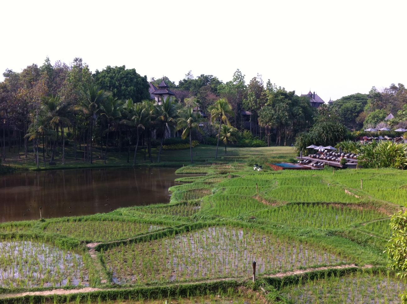 Bangkok und Chiang Mai thailand asien  Four Seasons CNX