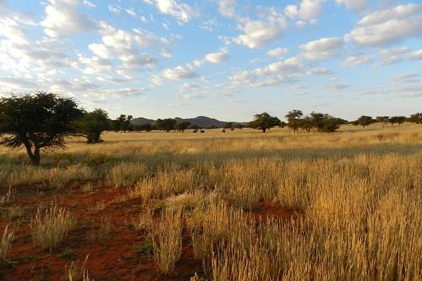 Rainbow Nation Südafrika suedafrika staedtereisen sonne safari afrika  Kalahari